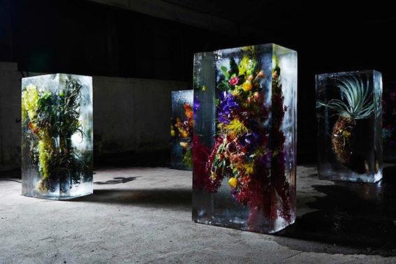 Iced Flowers Makoto Azuma Fb